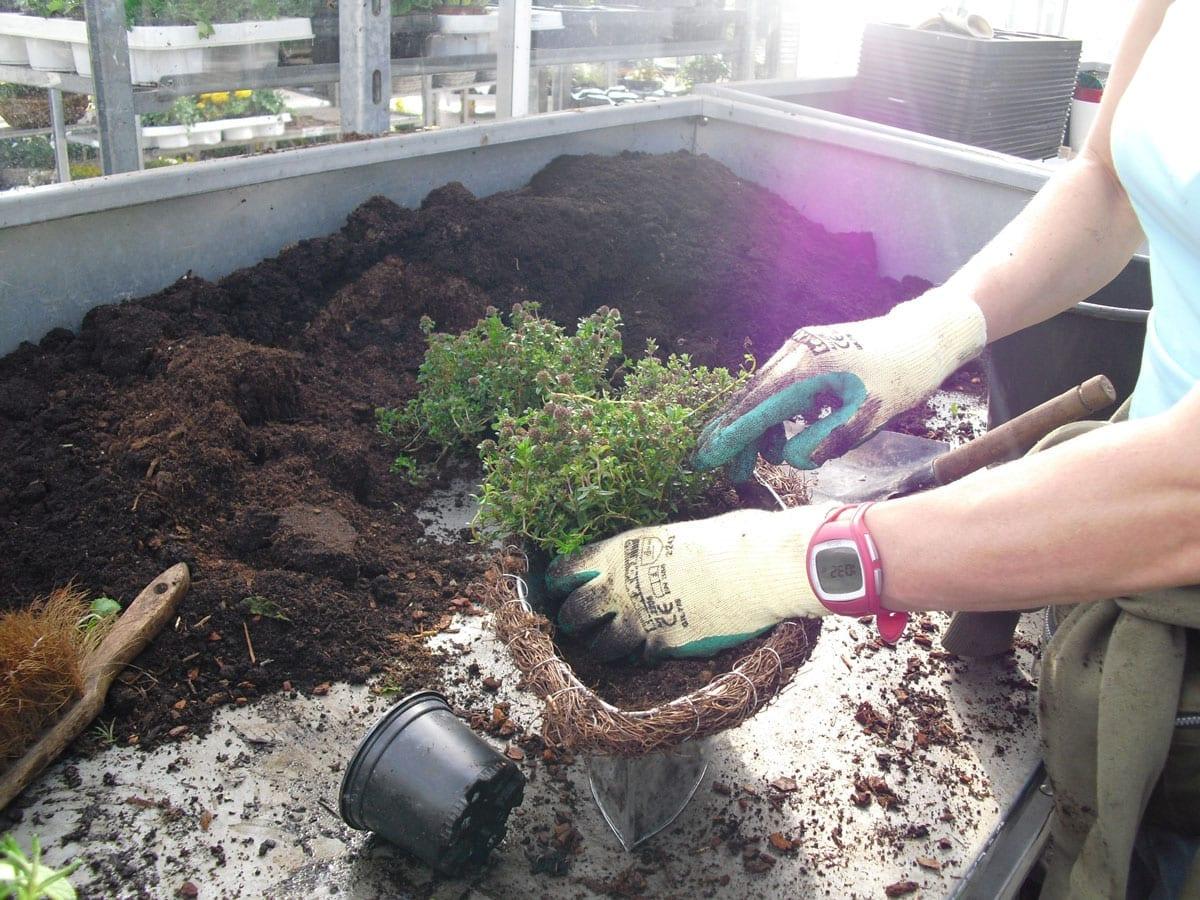 Foto von einer Person, die eine Pflanze umtopft