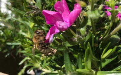 Wo die Biene – da das Leben!